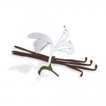 スイーツ系Vanilla Honeysuckle(バニラハニーサックル)の商品写真1枚目