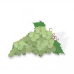 リキッドWhite Grape Juice(ホワイトグレープジュース) Captivapeの商品写真1枚目